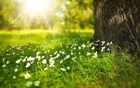 Spring Sanctuaries